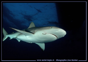 Reef shark checking out... :O)... by Michel Lonfat 